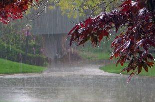 Дождь сказка