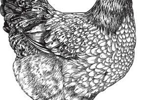 Куриный желудок сказка