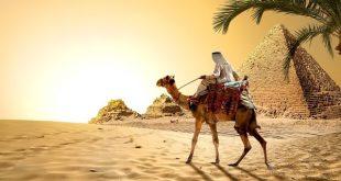 Проницательность бедуина