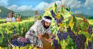 Виноградник соседа сказка